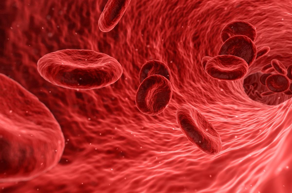 血管外科診療の概要
